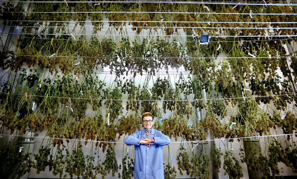 Patricia Rosi, CEO of Wellness Connection of Maine, in the marijuana drying room at Wellness Connection of Maine in Auburn