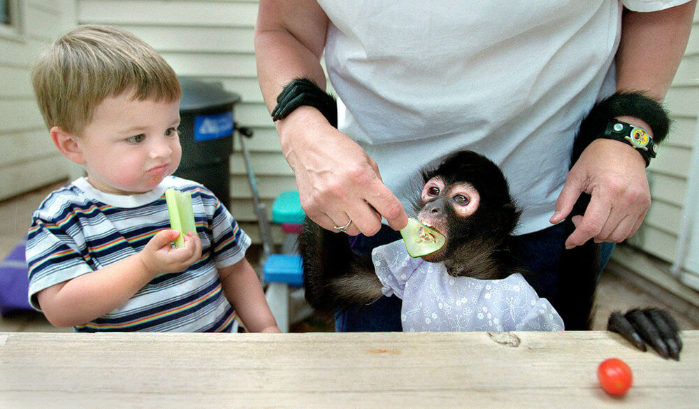 Photography of a little boy and a spider monkey sharing a lunch together in Wisconsin