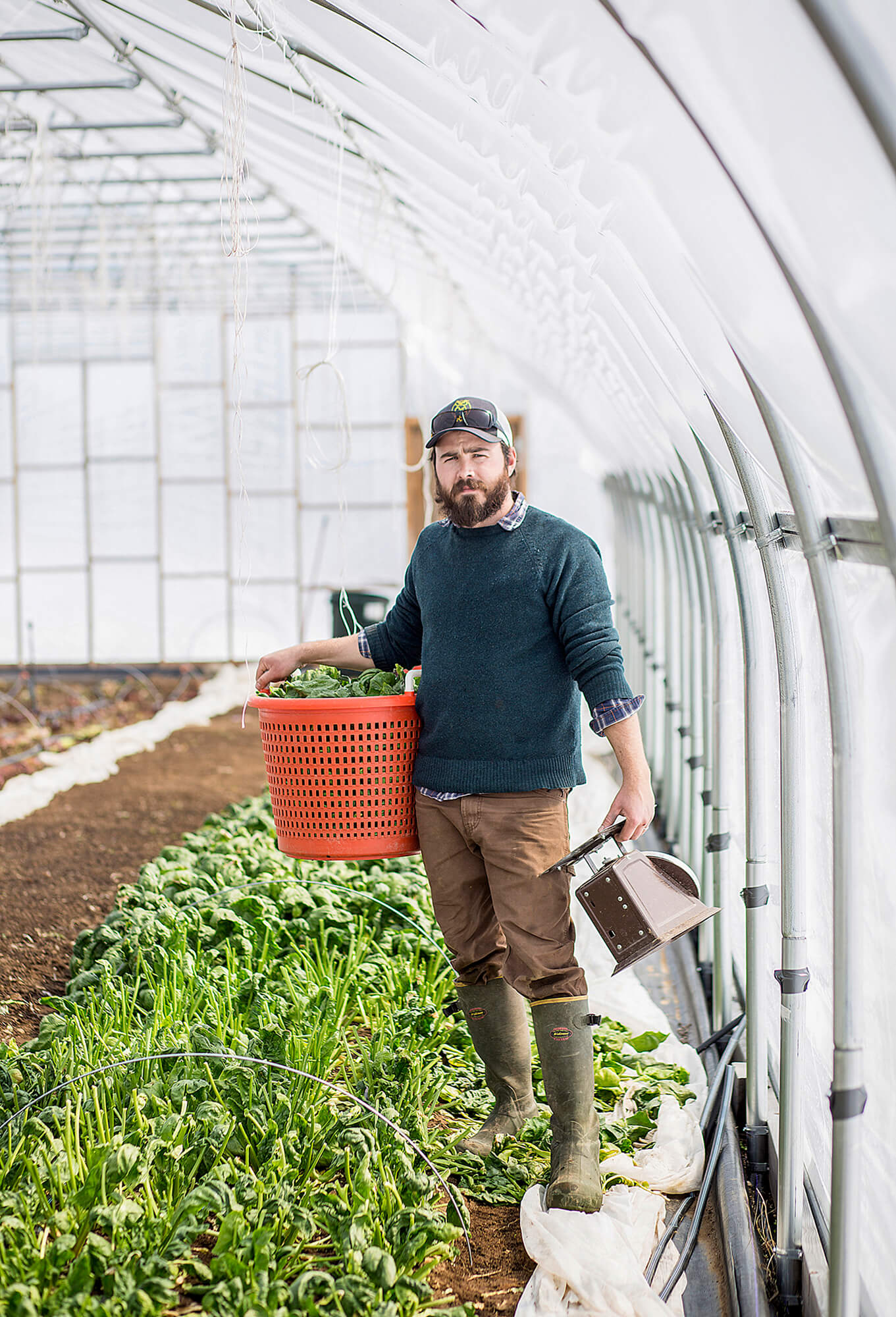 Portrait photography of Ben Whalen, co-owner of Bumbleroot Organic Farm, in a high tunnel after harvesting spinach on the Windham farm