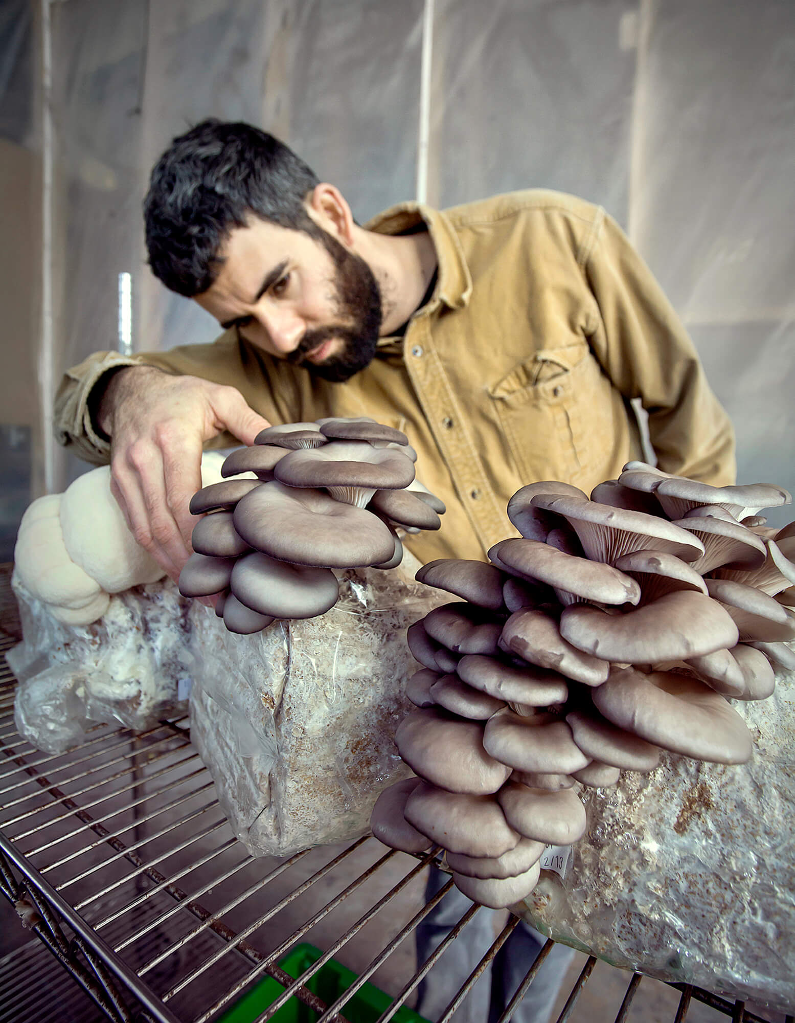 Portrait photography of Eliah Thanhauser, co-founder of North Spore Mushroom Company, in their facility with Blue Oyster and Lion's Mane mushrooms in Westbrook Maine