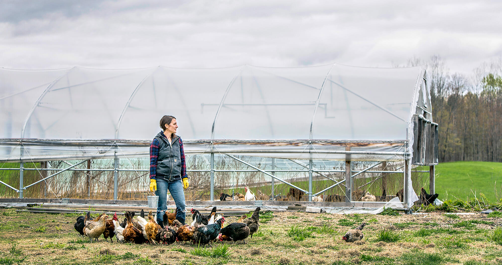 Portrait photography of Auburn farmer Karen Bolduc feeds some of her 100 laying hens on her farm